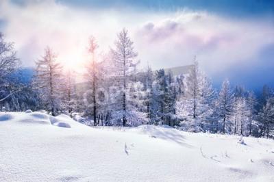 Fototapeta Śnieg pokryte drzewami w górach na zachodzie słońca. Piękny zimowy krajobraz. Zima leśnych. Twórcze działanie tonizujące