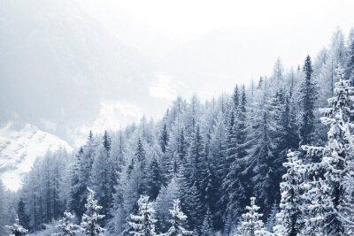 Fototapeta Śnieg pokryte lasu