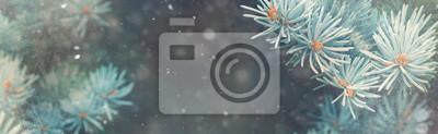 Fototapeta Śnieg w lesie zimą. Boże Narodzenie nowy rok magii. Niebieski Świerk Jodła oddziałów szczegółowo. Obraz baneru
