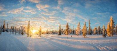 Fototapeta Snowy krajobraz o zachodzie słońca, mrożone drzewa w zimie w Saariselka, Laponia, Finlandia