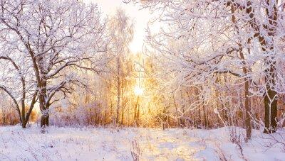 Fototapeta snowy winter landscape panorama
