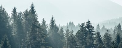 Fototapeta Sosna drzewa las stylizowane sylwetka tło transparent