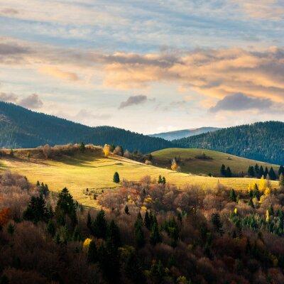 Fototapeta sosny w pobliżu doliny w górach na wzgórzu pod nieba z