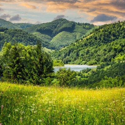 Fototapeta sosny w pobliżu łąki w górach