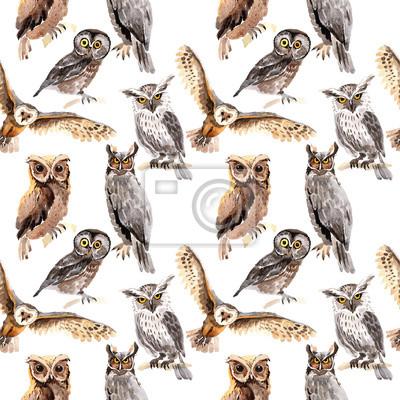 Fototapeta Sowa ptaka ptaka w przyrodzie według stylu akwarela. Dzika wolność, ptak z latającymi skrzydłami. Aquarelle ptak na tle, tekstury, deseniu, ramki, obramowanie lub tatuaż.