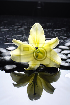 Spa martwa natura z kwiatem lilii na czarnym żwir