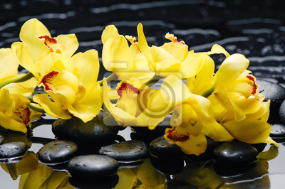 Spa martwa natura z kwitnienia oddział orchidea
