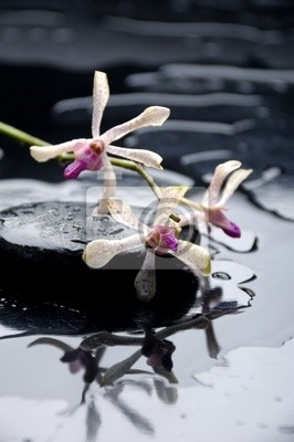 Spa martwa natura z orchidea na krople wody