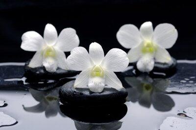 Spa Martwa natura z pięknej białej orchidei w terapii kamieniami