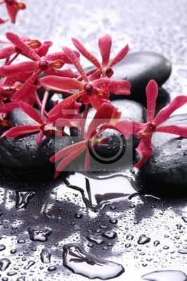 Spa still life i czerwony kwiat orchidei
