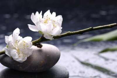 Spa still life z czarnych kamieni i liści bambusa