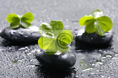 Spa still life z czarnych kamieni i liści z kropli wody