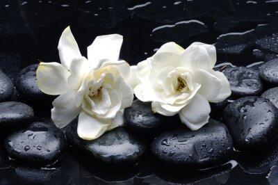 Spa still life z gardenia kwiat na kamyk