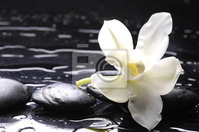Spa wciąż z białym kwiatem