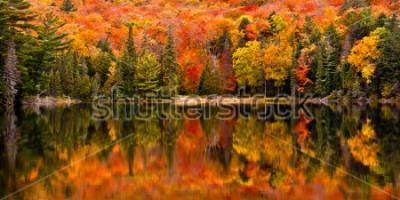 Fototapeta Spadek kolorów w dalszym ciągu wodach Canisbay Lake, Algonquin Provincial Park, Ontario, Kanada