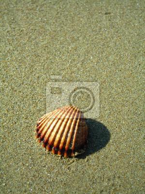Spiaggia conchiglia su