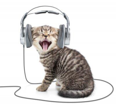Fototapeta Śpiew kociak kot w słuchawkach przewodowych słuchania muzyki
