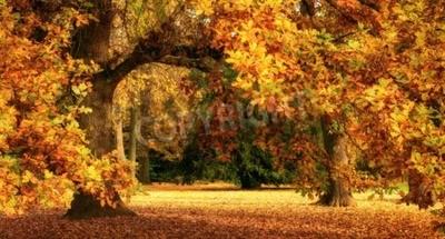 Fototapeta Spokojne jesiennej scenerii przedstawiający wspaniały dąb z kolorowych liści w parku, z miękkim światłem, szeroki format