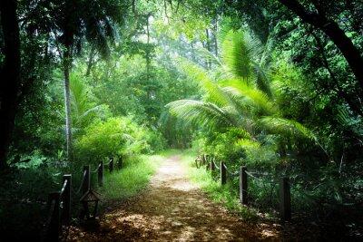 Fototapeta Sposób, w dżungli Seszele