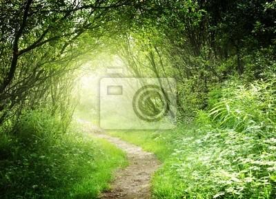 Fototapeta sposób, w głębokim lesie