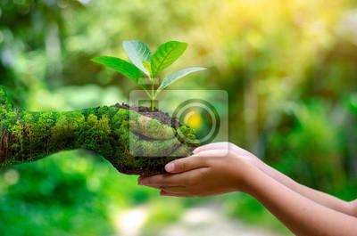 Fototapeta środowisko Dzień Ziemi W rękach drzew rosnących sadzonek. Bokeh zielone tło Samice dłoń trzymająca drzewa na polu przyrody trawy Koncepcja ochrony lasu