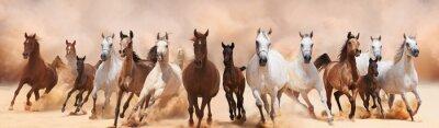 Fototapeta Stado koni z systemem w burzy piaskowej