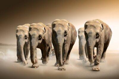 Fototapeta Stado słoni