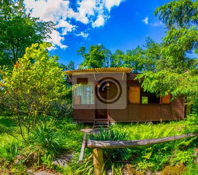 Fototapeta Stara chata ukryta w lesie na wiosnę