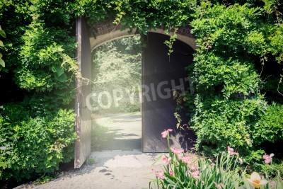 Fototapeta Stare drewniane drzwi z liany. Wejście do parku