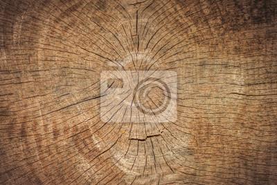 Tekstura drzewa