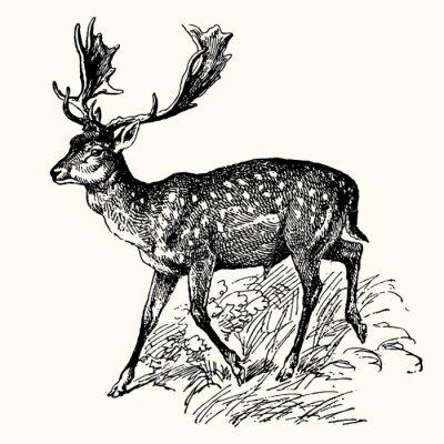 Fototapeta Starożytne Zwierzęta