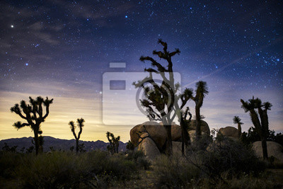 Fototapeta stars in the sky at joshua tree national park