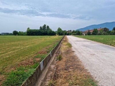Fototapeta strada campestre con campi ai lati e una fila di alberi