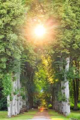 Fototapeta Straight forest pathway with beautiful sunrays