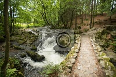 Stream przez słonecznego lasu
