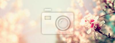 Fototapeta Streszczenie niewyraźne www transparent tło wiosną białe kwiaty wiśniowe drzewo. selektywnej ostrości. rocznik filtrowane z brokatem nakładki