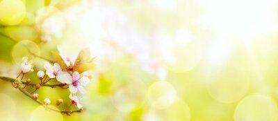Fototapeta Streszczenie wiosennych kwiatów tle; Wielkanoc krajobrazu