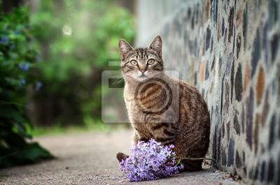 Fototapeta striped cat portrait with flowers