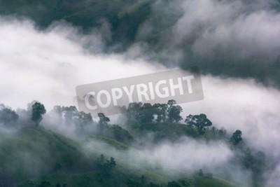 Fototapeta Strumień mgły w tropikalnym lesie deszczowym i krajobrazie górskim