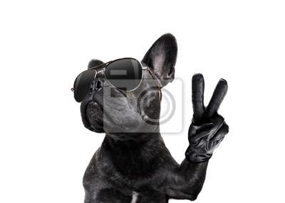 Fototapeta stwarzając psa okulary słoneczne i palce pokojowe