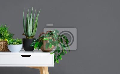 Fototapeta Stylowe wnętrze z różnymi roślinami doniczkowymi na szarej ścianie