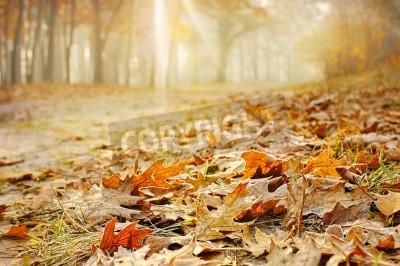 Fototapeta Suche liści dębu na ziemi w pięknym jesiennym lesie