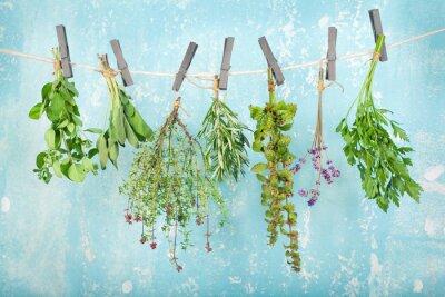 Fototapeta suche świeże zioła