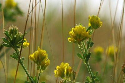 Summer flowering grass