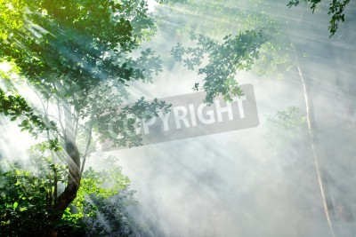 Fototapeta sunbeam rano w lasów tropikalnych Wróżka z dymu, ko laoliang Island, Tajlandia