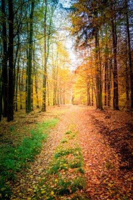 Fototapeta Sunny las jesienią w Polsce