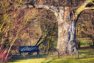 Fototapeta Sunny path in park