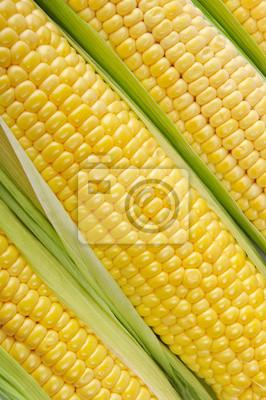 surowego kukurydza