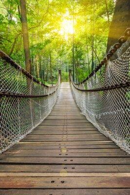 Fototapeta Suspension bridge in the forest