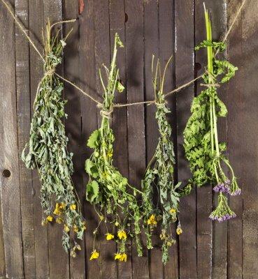 Fototapeta Suszone zioła lecznicze na ciąg